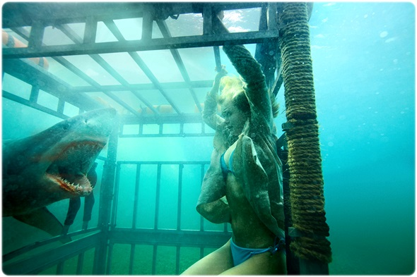 Shark Night003