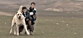 Taşranın sinemasında eksik olan Mizaha sahip: Sivas